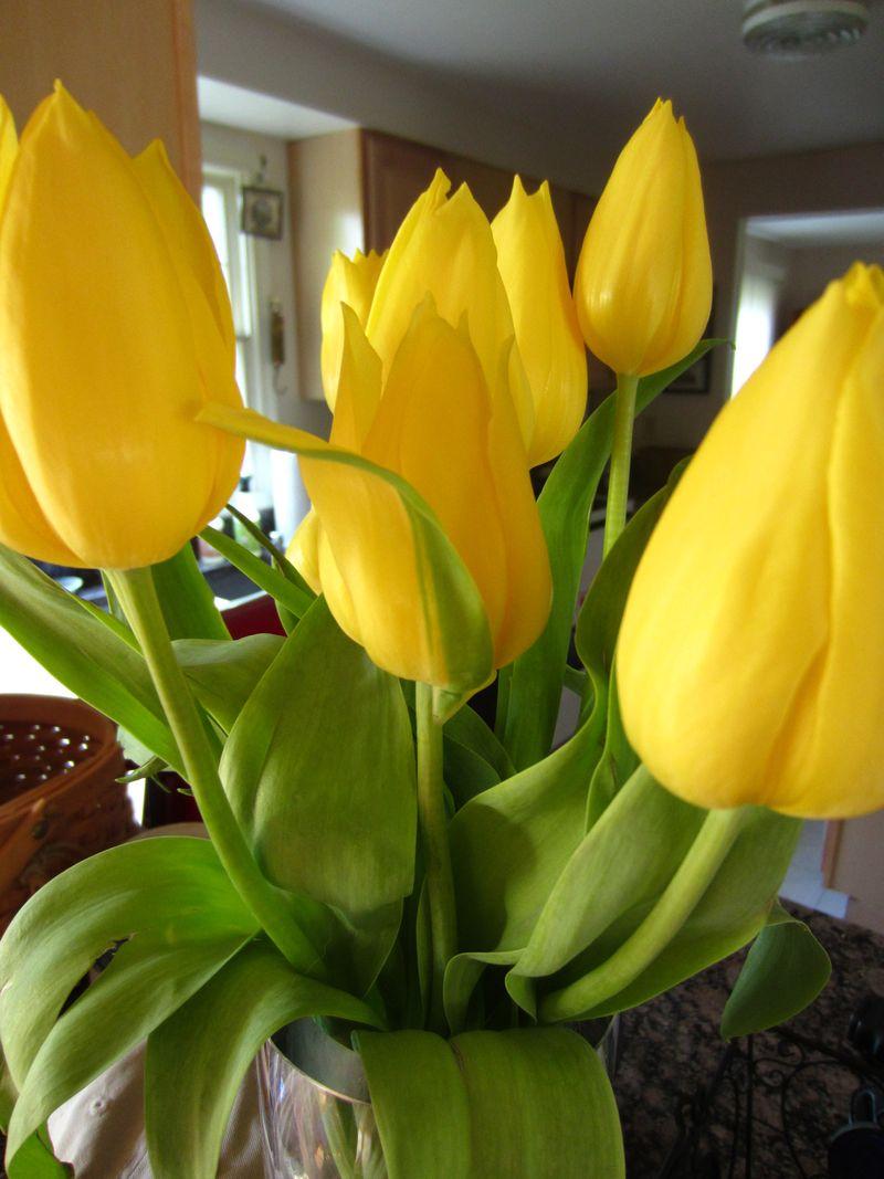 Yellow-tulip-bunch