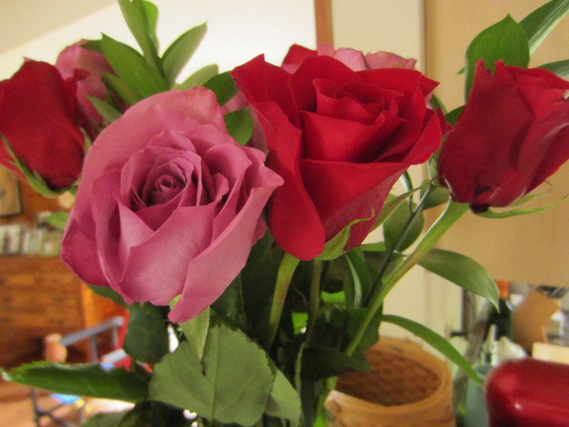 Anniversary-roses