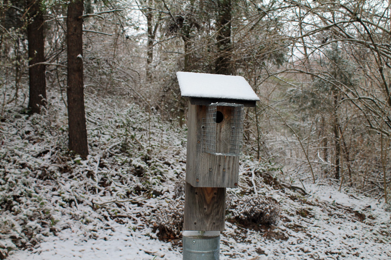 Bluebird-house-in-snow