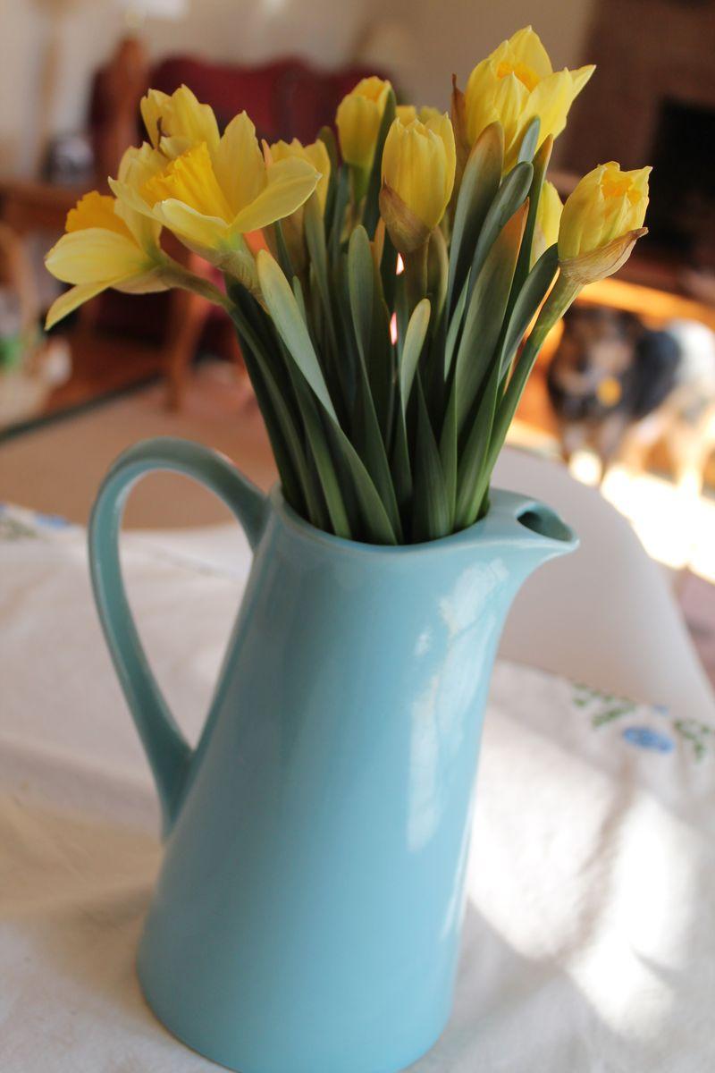 February-daffodils