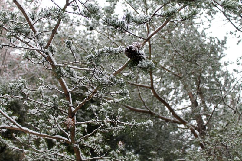 Virginia-snow-2013