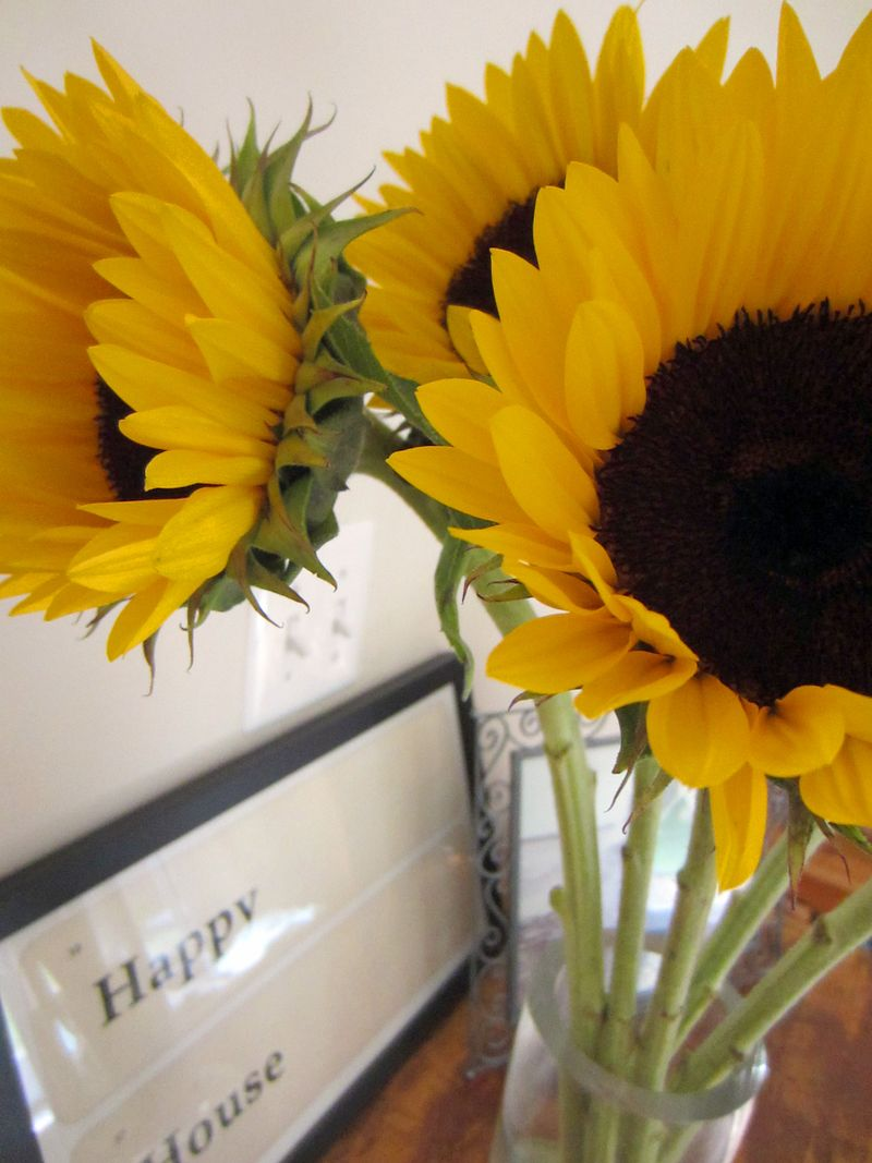 Happy-sunflowers-sep