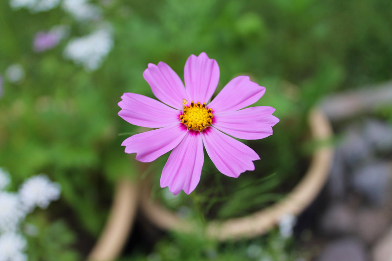 July-flower-small