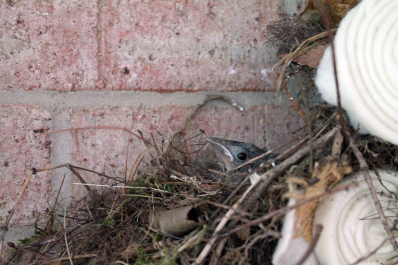 Bye Bye Baby Bird in Nest
