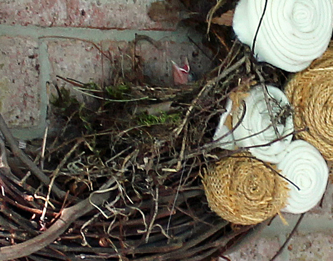 Baby-bird-in-nest-july-2013